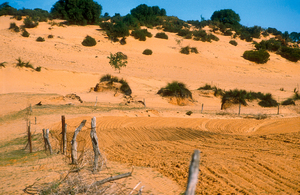 Cleared sand dune country on the Cooke Plains, SA. 1992.