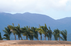 Palms planted along marina entrance at Port Hinchinbrook Resort, Cardwell. QLD.