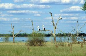 Pelicans, black swans, cormorants and other water birds