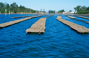 Oyster leases on the Clyde River at Bateman's Bay, NSW. 2004.