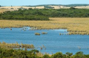 Coola Coola Swamp, part of the Cortina Lakes wetlands, SW of Keith, SA. 1993.