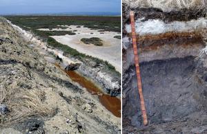 Bleached-sodic, Sulfuric, Hypersalic, Hydrosol soil profile near Gillman, South Australia