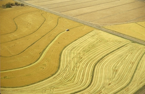 Aerial view of rice harvesting in the Murrumbidgee Irrigation Area