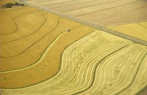 Aerial view of rice harvesting in the Murrumbidgee Irrigation Area