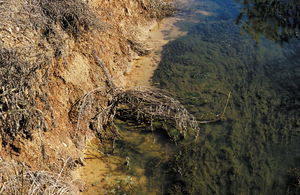 Algae growth in drainage channel, Murrumbidgee Irrigation Area, Griffith. NSW.