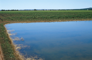 On farm evaporation pond with mature vines in background, Griffith. NSW.