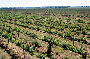 McWilliams Wines vineyards at Hanwood (near Griffith) NSW.
