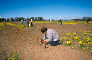 Planting quandongs at a Native Foods field trial
