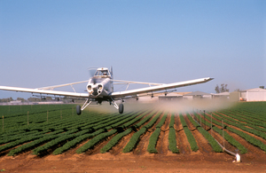 Aerial spraying, using fungicides/herbicides, of a carrot crop by Godfrey Gardner of Agricair at Virginia, SA. 2003.