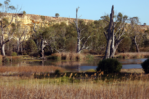 Backwaters of the River Murray