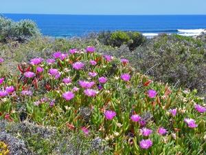 Coastal flora on Rottnest Island, Western Australia