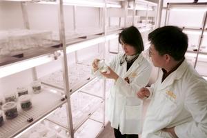 Assessing immunised barley seedlings