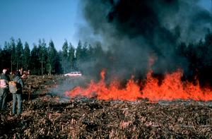 Burning Plantation Harvest  Residues