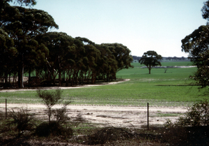 A paddock containing native remnant vegetation to promote biodiversity