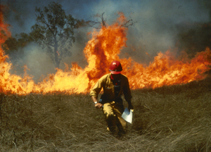 Experimental Grassfire