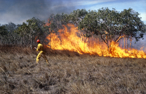 Grassfire Experiment