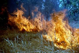 Scrub Fire