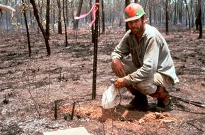 Testing Fire Intensity in Kakadu