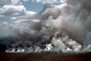 Fire Gasses and the Greenhouse Effect