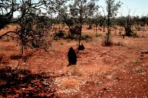 Vegetation Loss Effecting Soil Quality