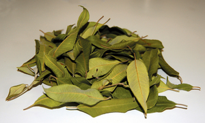 Dried Lemon Myrtle Leaves - Backhousia citriodora