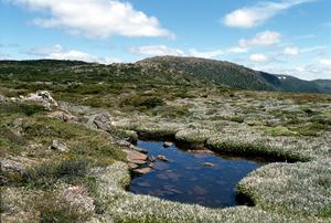 Bolster Moor Mt Field National Park