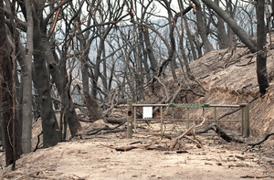 The Kinglake National Park after the 'Black Saturday' bushfires