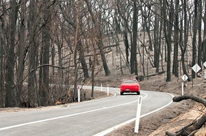 The road through the Kinglake National Park after the 'Black Saturday' bushfires