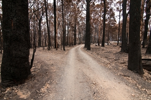Private road leading to damaged property at Kinglake after the 'Black Saturday' bushfires