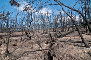 Kinglake National Park after the 'Black Saturday' bushfires