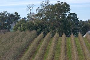 Crop rows on a farm