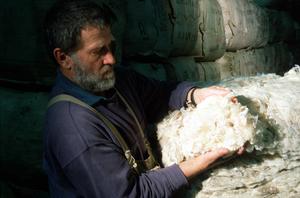 Examining Scoured Wool Bales