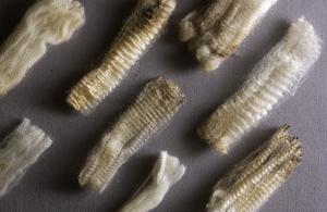 A Naturally Wavy Sample of Wool
