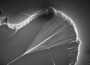 Carbon nanotubes being 'spun' to form a yarn.