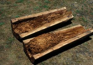 Termite Nest in a Pole
