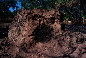 A Damaged Termite Mound