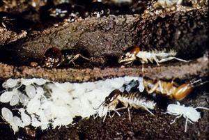 Inside a Termite Nest