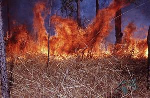 Fire Intensity