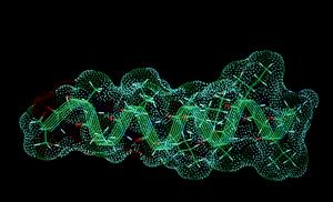 Molecular Model of HIV Protein