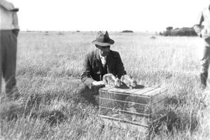 Releasing the Myxoma Virus for Rabbits