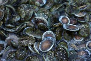 Abalone farm