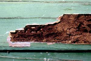 Termite Damaged Weatherboard