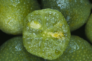 The Australian Outback Lime