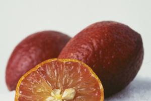 Blood limes