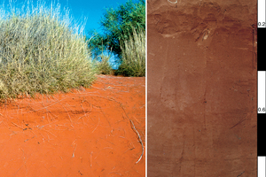 Red-Orthic Tenosol soil profile located 110 km south south-west of Alice Springs, Northern Territory