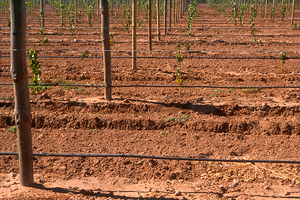 Drip irrigation installed at new vineyards near Angle Vale, SA. 2003.