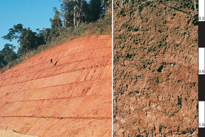 Red Dermosol soil profile in the Atherton Tablelands, north Queensland