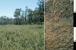 Redoxic Hydrosol soil profile at a subalpine site in Bago State Forest, southern New South Wales