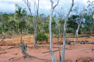 Dead trees and tree stumps with exposed roots remain precariously balanced on ridges of soil as a result of dryland salinity and gully erosion, near Charters Towers. QLD.