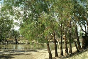 Chowilla creek scene, Chowilla. SA.